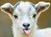 :goat: